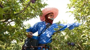 Farm Worker's Health